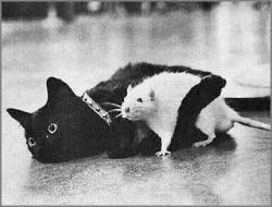 Cat-Rat-Love