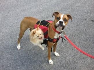 Mountainsmith Dog Pack - 2011